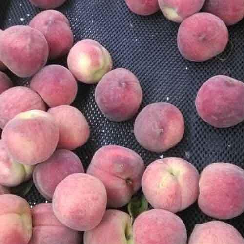 Fresh Produce Matting